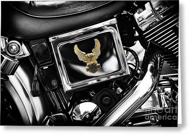 Golden Eagle Greeting Cards - Golden Eagle Greeting Card by Tim Gainey