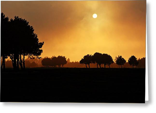 Rolling Hills Of France Greeting Cards - Golden Evening Light Greeting Card by Aidan Moran