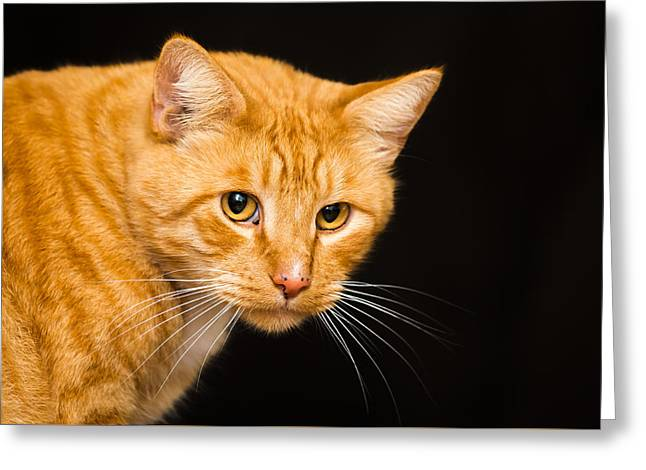 House Pet Greeting Cards - Golden Eye Greeting Card by Brett Bentley