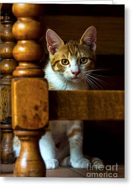 Youthful Greeting Cards - Golden Eyes Greeting Card by Gary Holmes