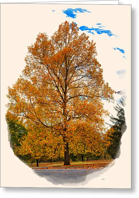 Apparel Greeting Cards - Golden Fall Colors 2 Greeting Card by John Bailey