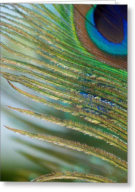 Golden Feather Greeting Card by Lisa Knechtel