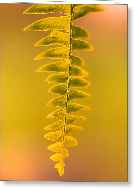 Fern Greeting Cards - Golden Fern Greeting Card by Shane Holsclaw