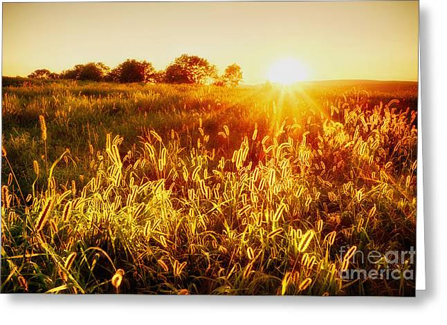 Golden Fields Greeting Card by Mark Miller