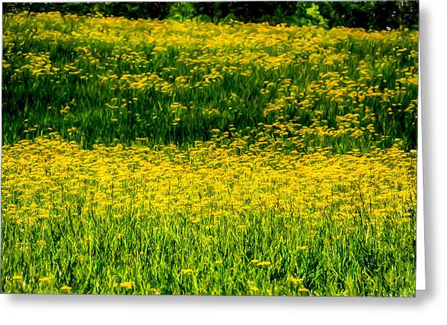 Tn Greeting Cards - Golden Fields of Cades Cove Greeting Card by John Haldane