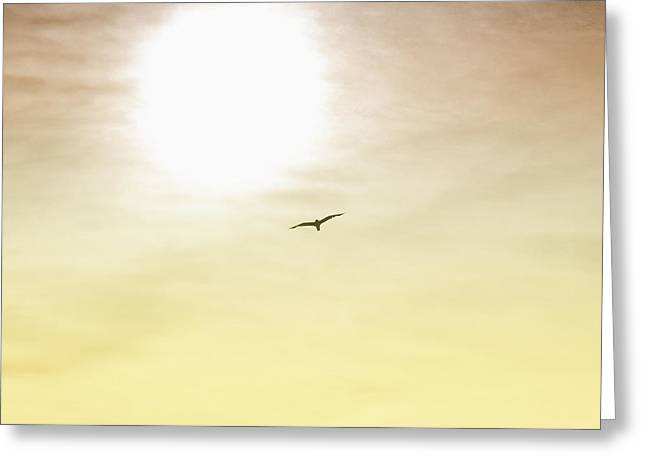 Flying Seagull Digital Art Greeting Cards - Golden Flyer Greeting Card by Bill Cannon