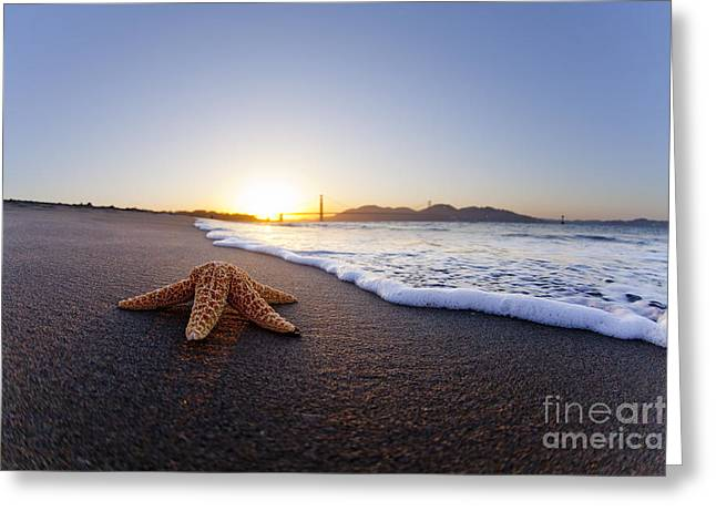Shack Greeting Cards - Golden Gate Starfish Greeting Card by Sean Davey