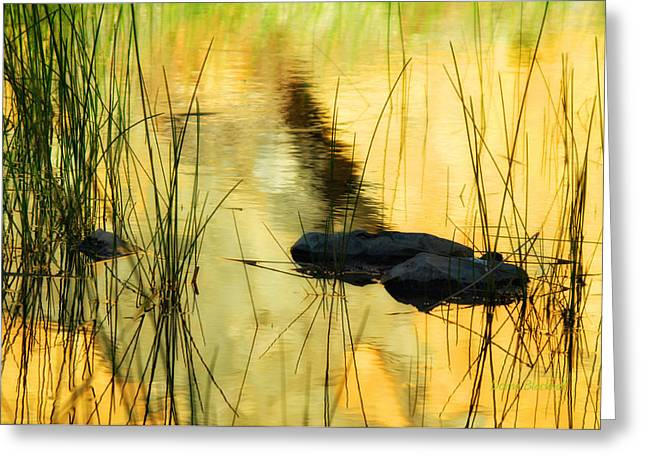 Water Flowing Greeting Cards - Golden Glow Greeting Card by Donna Blackhall