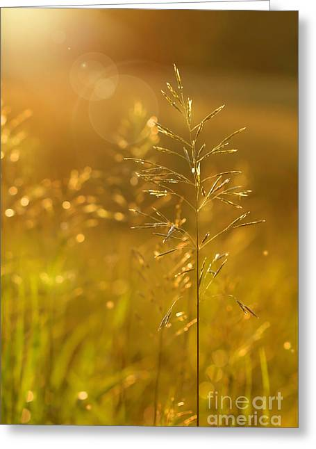Setting Digital Art Greeting Cards - Golden glow Greeting Card by Sandra Cunningham