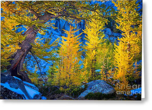 Golden Grove Greeting Card by Inge Johnsson