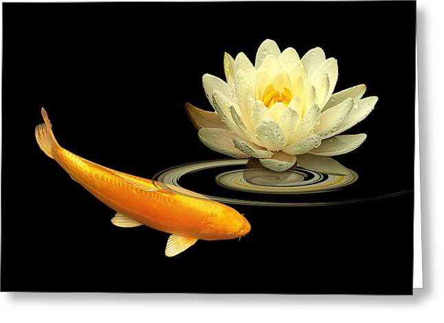 White Waterlily Greeting Cards - Golden Harmony - Koi Carp With Water Lily Greeting Card by Gill Billington