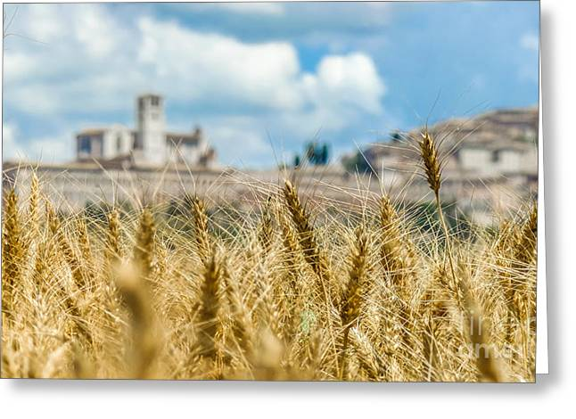 Historic Architecture Greeting Cards - Golden Harvest field and the blurred town of Assisi, Umbria, Ita Greeting Card by JR Photography