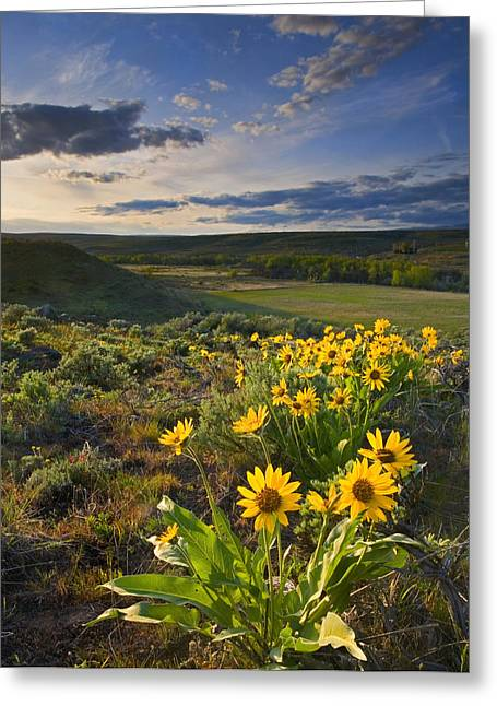 Sagebrush Greeting Cards - Golden Hills Greeting Card by Mike  Dawson