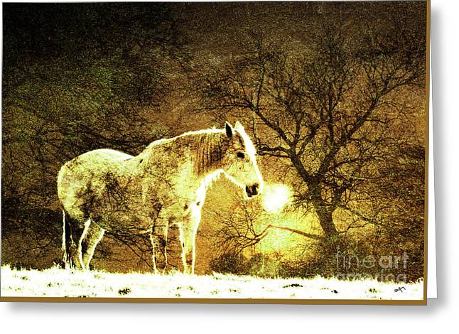 Golden Horse Greeting Card by Callan Percy
