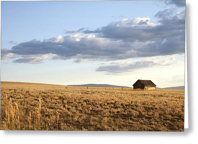 Outbuildings Greeting Cards - Golden Hours On The Prairies Greeting Card by Theresa Tahara