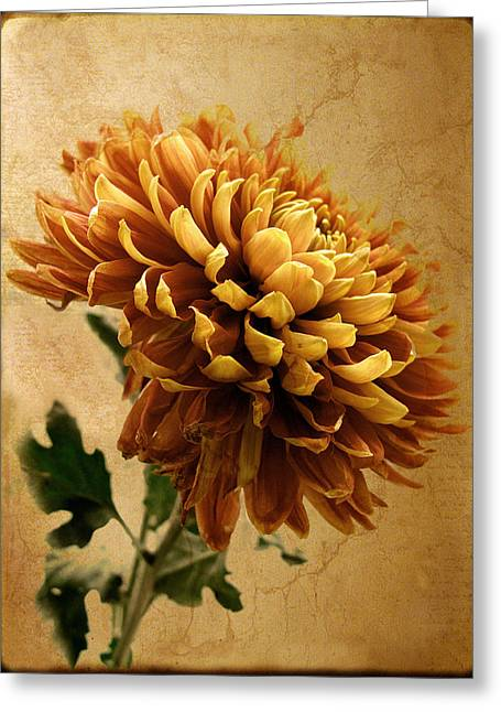 Texture Flower Greeting Cards - Golden Mum Greeting Card by Jessica Jenney