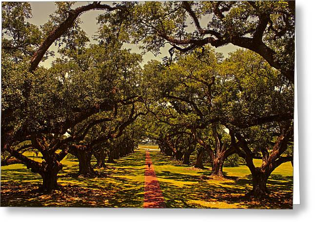 River View Greeting Cards - Golden Oaks Greeting Card by Judy Vincent