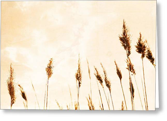 Sea View Greeting Cards - Golden Oats Greeting Card by Colleen Kammerer