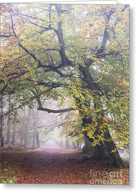 Golden Path Greeting Card by Tim Gainey