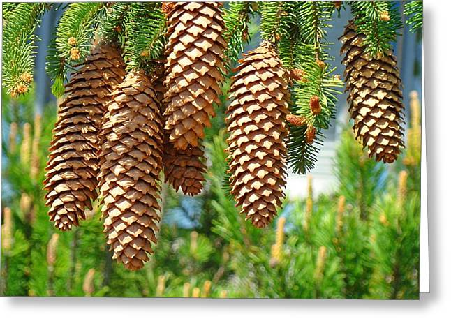 Pine Cones Greeting Cards - Golden Pine Cones art prints Pine Trees Baslee Troutman Greeting Card by Baslee Troutman