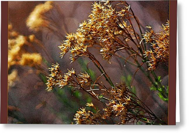Sunlight On Flowers Greeting Cards - Golden Points Greeting Card by Gretchen Wrede
