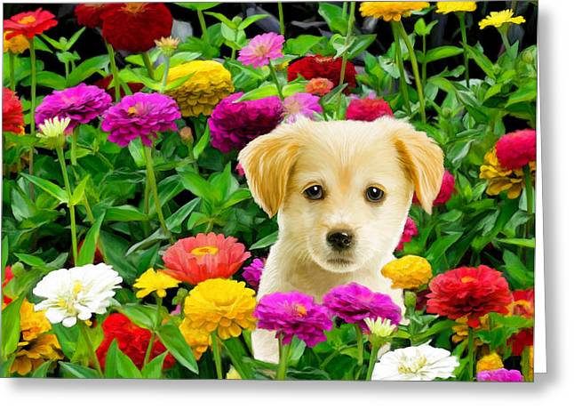Puppies Digital Art Greeting Cards - Golden Puppy in the Zinnias Greeting Card by Bob Nolin