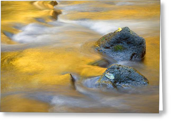 Leafs Greeting Cards - Golden Refuge Greeting Card by Mike  Dawson
