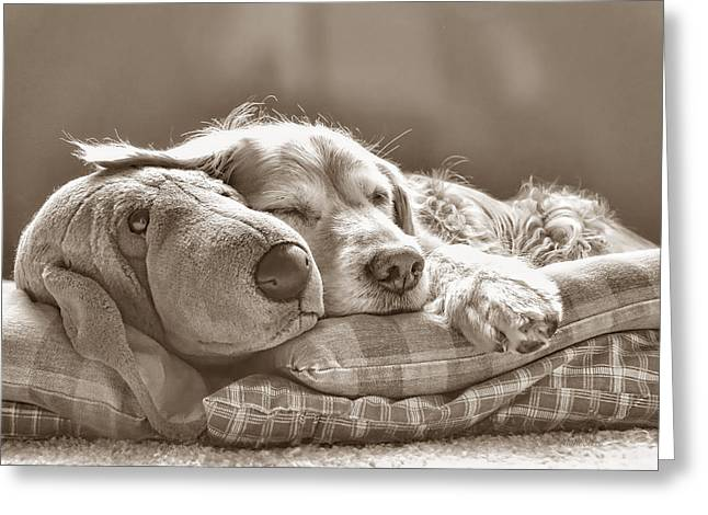 Golden Retriever Dog Sleeping With My Friend Sepia Greeting Card by Jennie Marie Schell