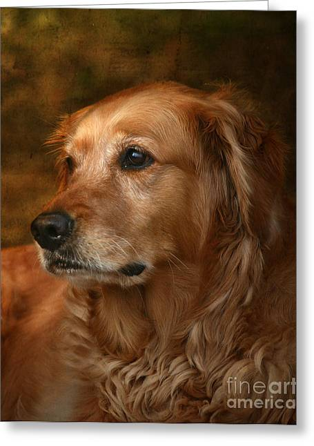 Dogs Photographs Greeting Cards - Golden Retriever Greeting Card by Jan Piller
