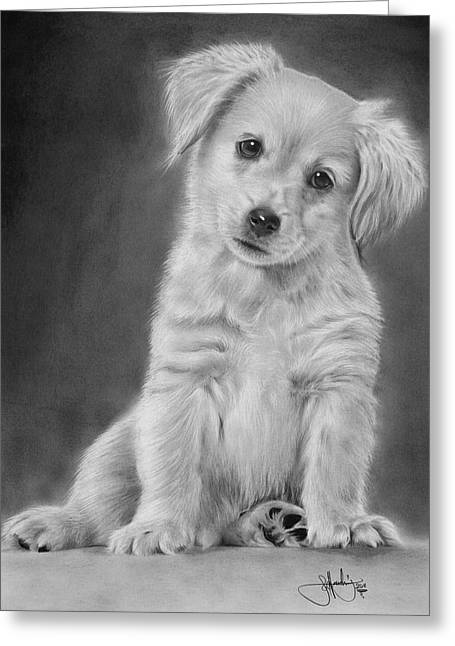 Puppies Drawings Greeting Cards - Golden Retriever Puppy drawing Greeting Card by John Harding