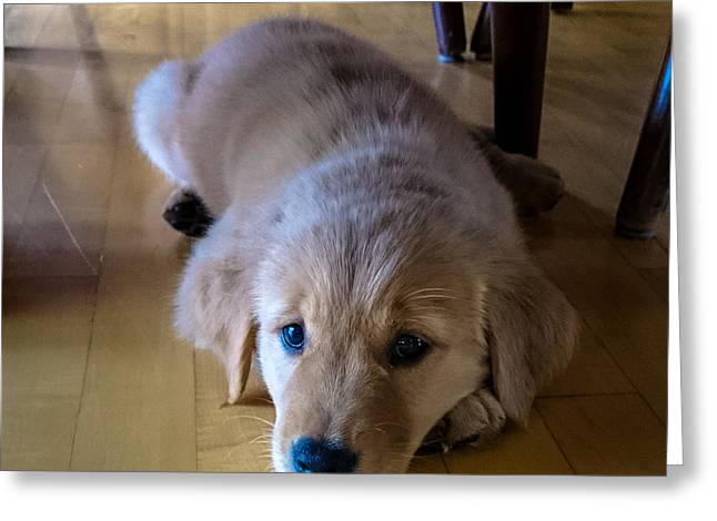 Puppies Photographs Greeting Cards - Golden Retriever Puppy Greeting Card by William Wight