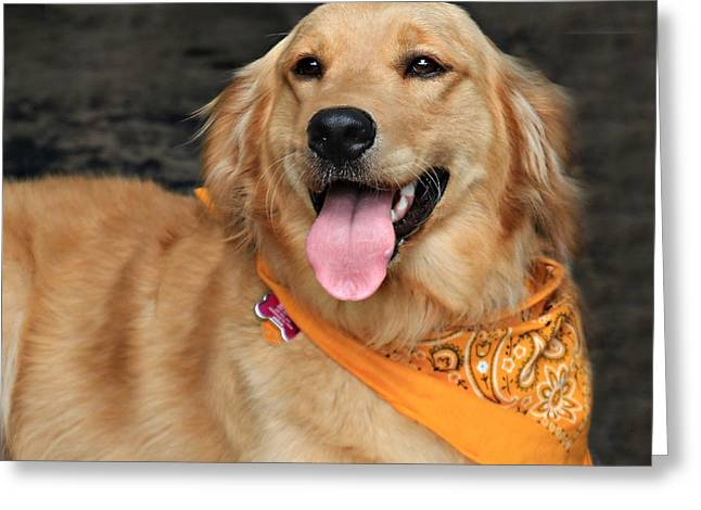 Stein Greeting Cards - Golden Retriever. Greeting Card by Valerie Stein