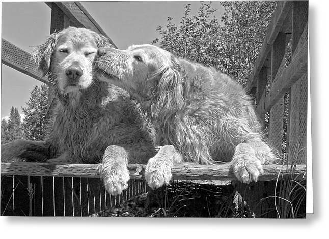 Gray Greeting Cards - Golden Retrievers the Kiss Black and White Greeting Card by Jennie Marie Schell