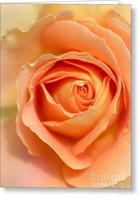 Flower Blooms Greeting Cards - Golden Rose Greeting Card by Ana V  Ramirez
