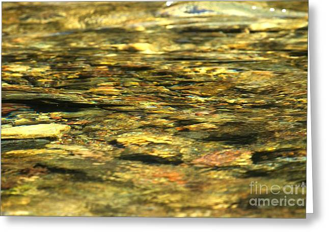 North Fork Greeting Cards - Golden Shimmers Greeting Card by Adam Jewell