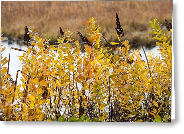 Subtle Colors Greeting Cards - Golden Shrubbery at the Pond Greeting Card by SH Suddes