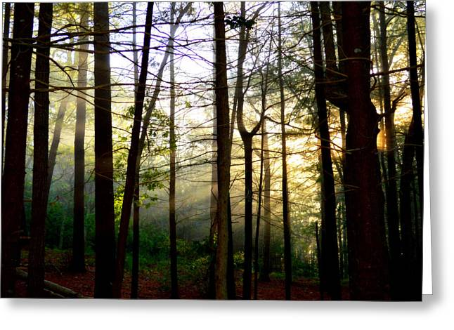 Intrigue Greeting Cards - Golden Silence Greeting Card by Dianne Cowen