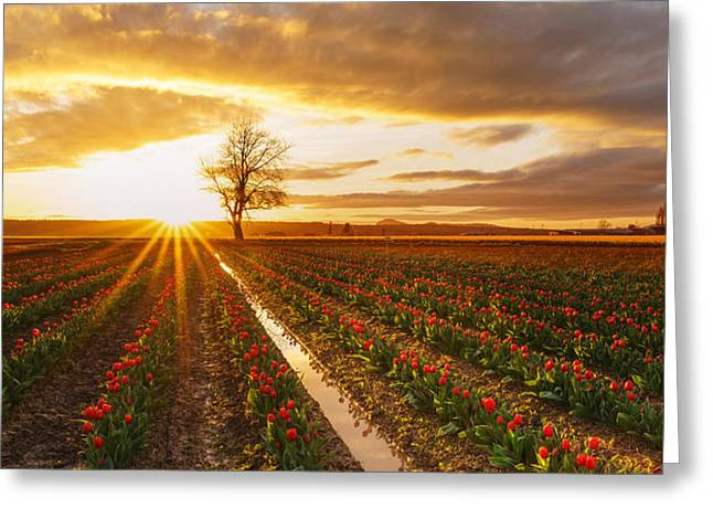 Mount Vernon Greeting Cards - Golden Skagit Valley Sunset Greeting Card by Mike Reid