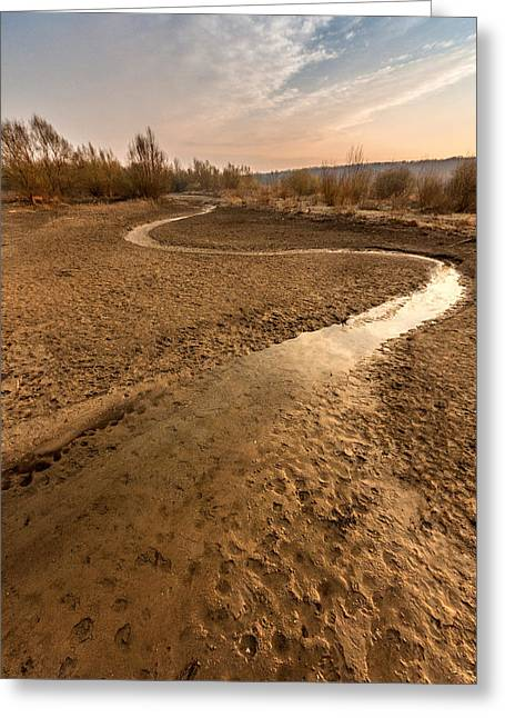 Golden Sand Greeting Cards - Golden stream Greeting Card by Davorin Mance