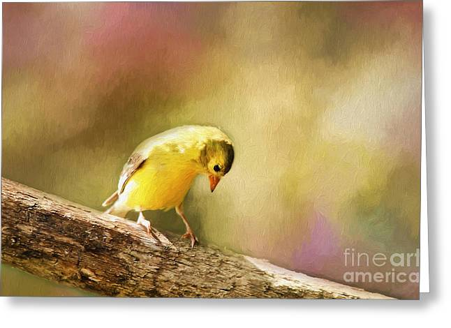 Goldfinch Digital Art Greeting Cards - Golden Summer Greeting Card by Darren Fisher