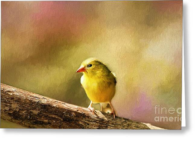 Goldfinch Digital Art Greeting Cards - Golden Summer II Greeting Card by Darren Fisher