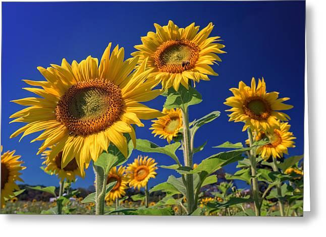 Golden Sun Greeting Card by Rick Berk