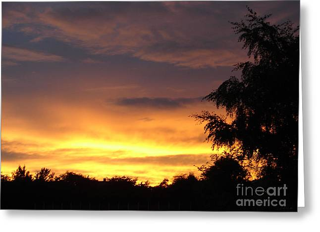 Toffee Greeting Cards - Golden sunset 2 Greeting Card by Carol Lynch