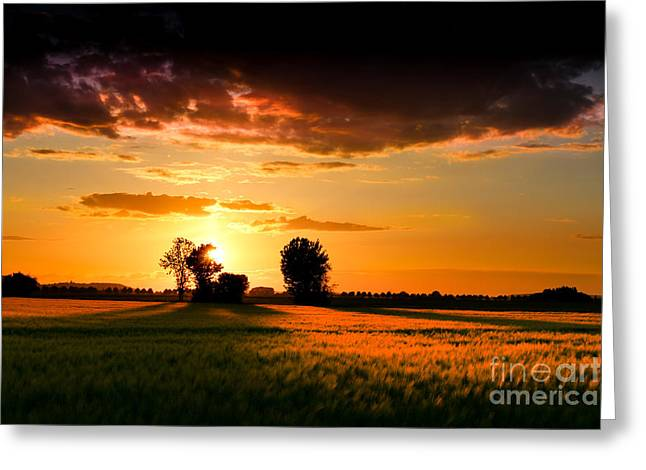 Cornfield Digital Art Greeting Cards - Golden Sunset Greeting Card by Franziskus Pfleghart
