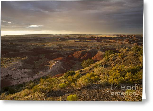 Petrified Forest Arizona Greeting Cards - Golden Sunset Over the Painted Desert Greeting Card by Melany Sarafis