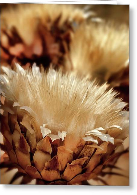 Golden Thistle II Greeting Card by Bill Gallagher