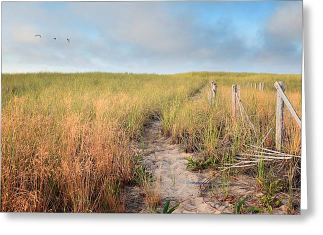 Minimalist Greeting Cards - Golden Trail Greeting Card by Bill  Wakeley