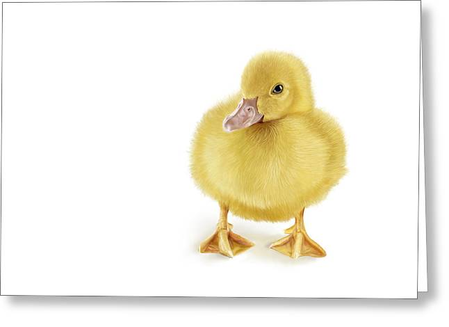 Ducklings Digital Greeting Cards - Golden Treasure Greeting Card by Bob Nolin