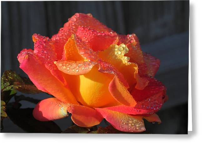 Botanical Greeting Cards - Golden Treasure Rose Greeting Card by Rumyana Whitcher