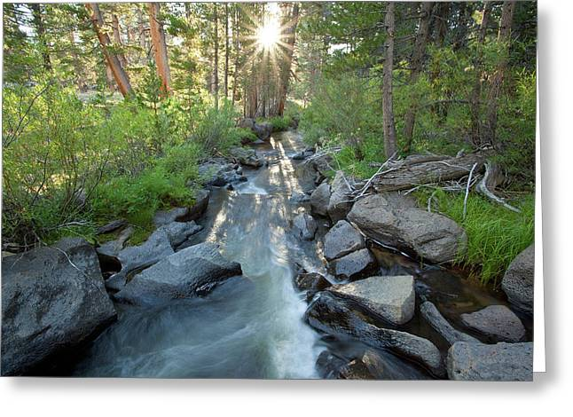 Golden Trout Greeting Cards - Golden Trout Creek Greeting Card by Nolan Nitschke